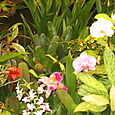 Orchids at Botanical Garden