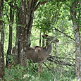 Antelope, Pilanesburg Nature Reserve